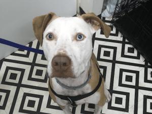 דלקת בפרוסטטה בכלבים לא מסורסים